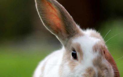 cruelty-free and vegan brands